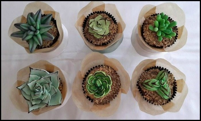 Succulent Cupcakes Main Photo